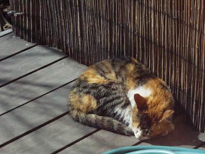 cat0802.jpg
