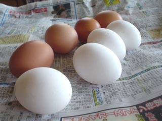 egg0806.jpg