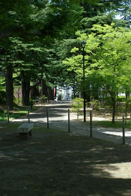 forest0806.jpg