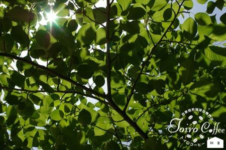 green0807.jpg