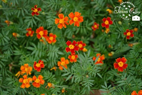 orange0808.jpg
