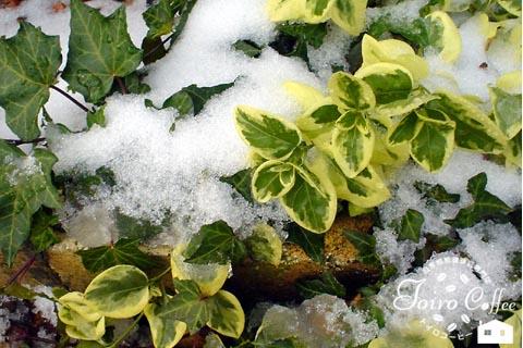 snow0811.jpg